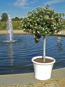 Hampton Court:  power and formal fountains