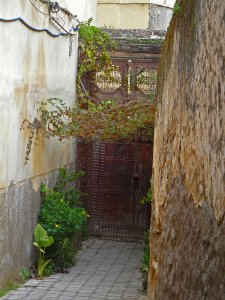 Hidden garden space in the Medina