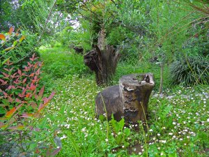 Garden in Nanos, a rambling mix of wild and cultivated flowers and trees. Slovenia 2014