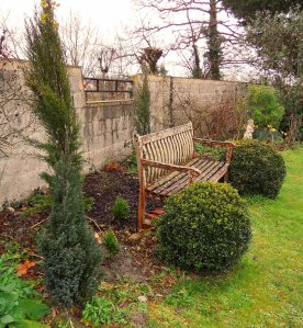 Side shot, showing Cupressus sempervirens 'Totem Pole' far left,  then Chamaecyparis lawsoniana 'Blue Gem',Buxus sempervirens 'Graham Blandy', Buxus sempervirens 'Green Gem' and my Scottish Buxus sempervirens suffruticosa boxballs in front of the seat.