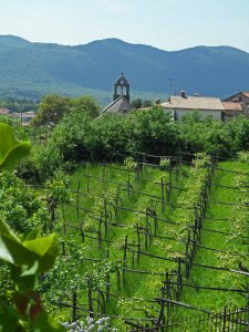 Vineyards in the Vipava valley, Slovenia, May 2014