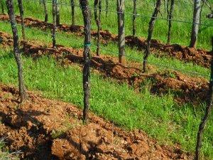 Rich soil: Slovenia, May 2014