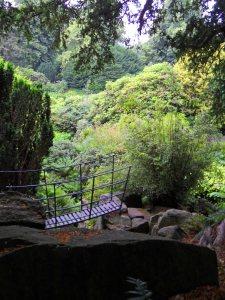 The bridge through the Himalayan Glen, Biddulph Grange, July 2014