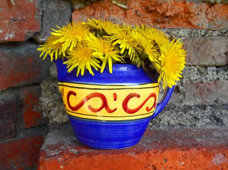 Tarraxacum officinale in a jug in our old bread oven, April 15