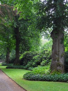 The Lime Walk, Biddulph Grange July 2014