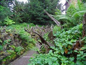The Stumpery, Biddulph Grange July 2014