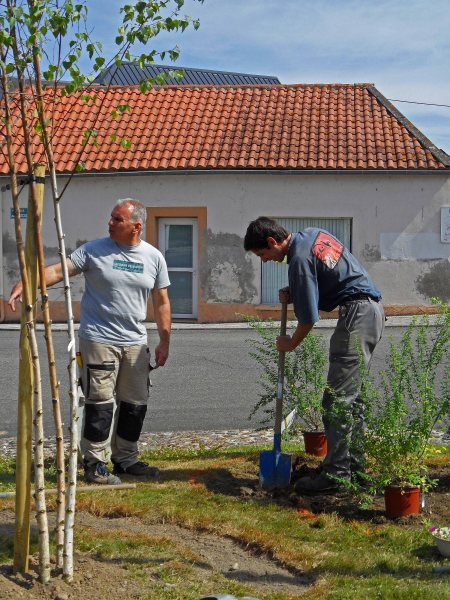 Herve advising Sebastien as he digs in the Genista 'Porlock' Tostat roundabout, May 2015
