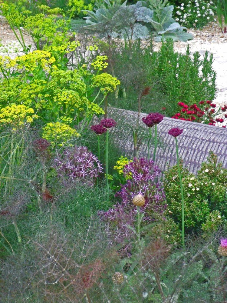 Spot Dianthus cruentus. Cleve West, Best in Show, Chelsea 2011.