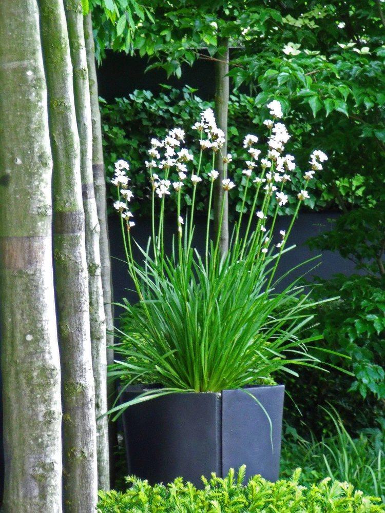 Nordfjell garden, Chelsea 2009