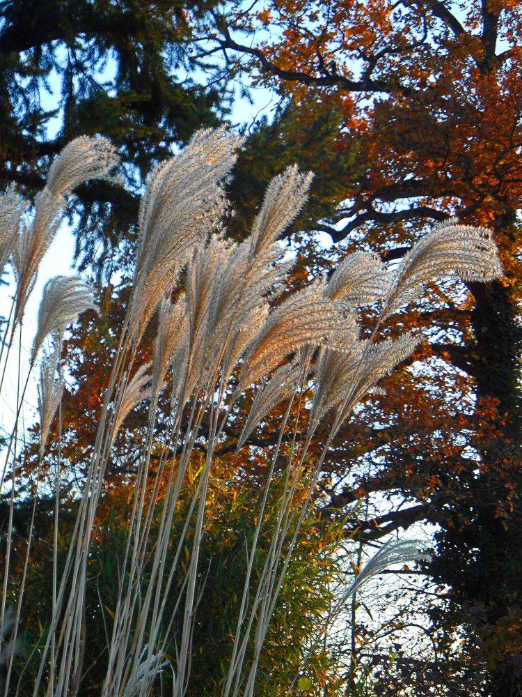 December grasses 2 1215