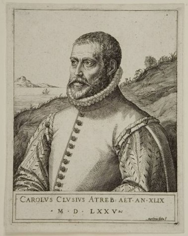Carolus Clusius, 1575, by Martin Rota credit: http://www.chicagobotanic.org/library/stories/clusius-part-2