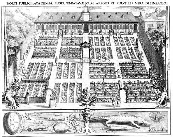 Engraving of the Clusius Garden, 1610, by Woudanus credit: http://www.hortusleiden.nl/index.php/a_birds_eye_view_of_the_hortus/the_clusius_garden/
