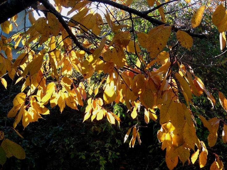 autumn-1116