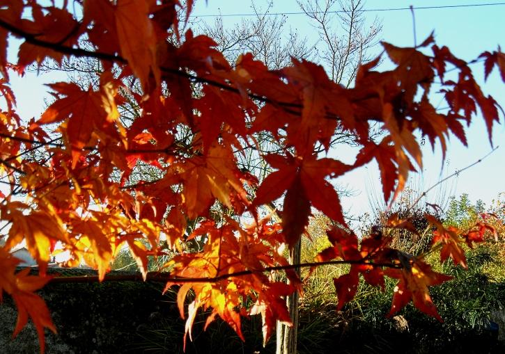 autumn-2-1116