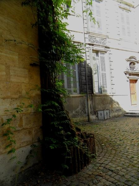 bordeaux-wisteria-916