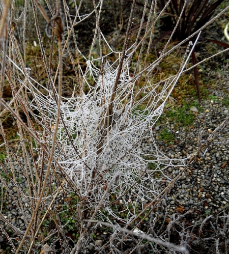 frosted-webs-117