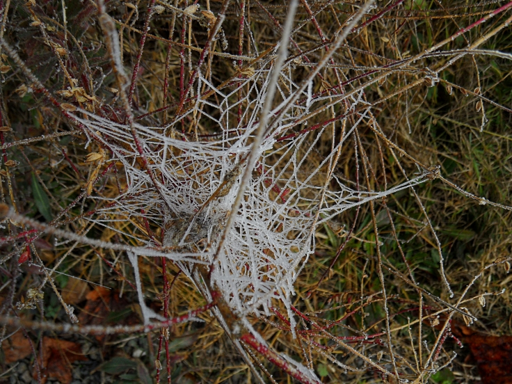 frosted-webs-3-117