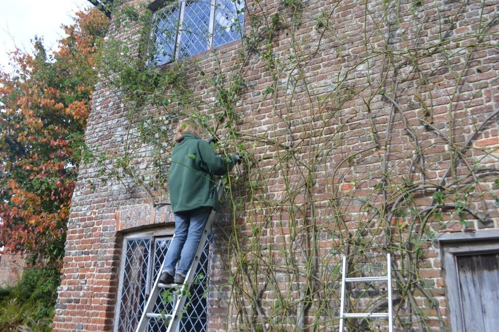 jo-pruning-rose