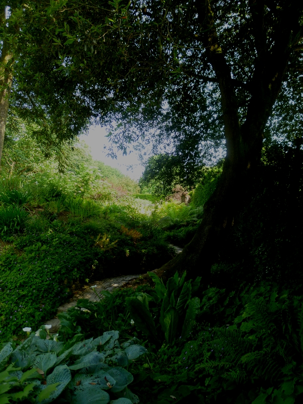 Hidcote light and shade 617