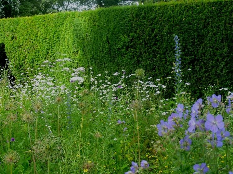 Kiftsgate wild garden 617