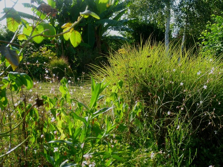 August garden 1