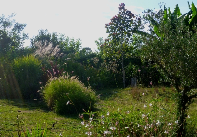 August garden 2