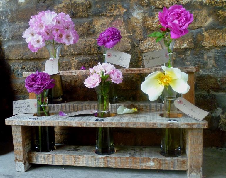 Siss Roses 617