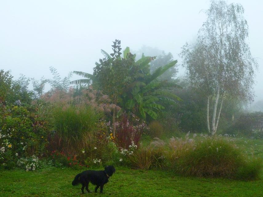October garden 1017