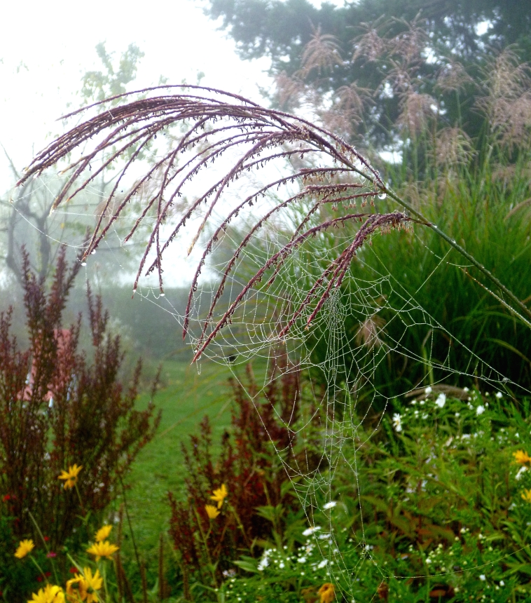 October garden 2 1017