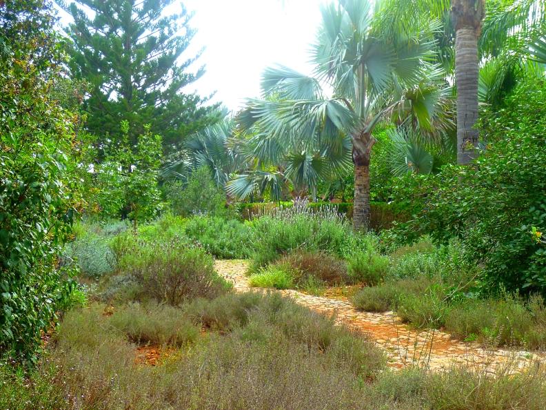 Alicante Albarda groundcover 1017