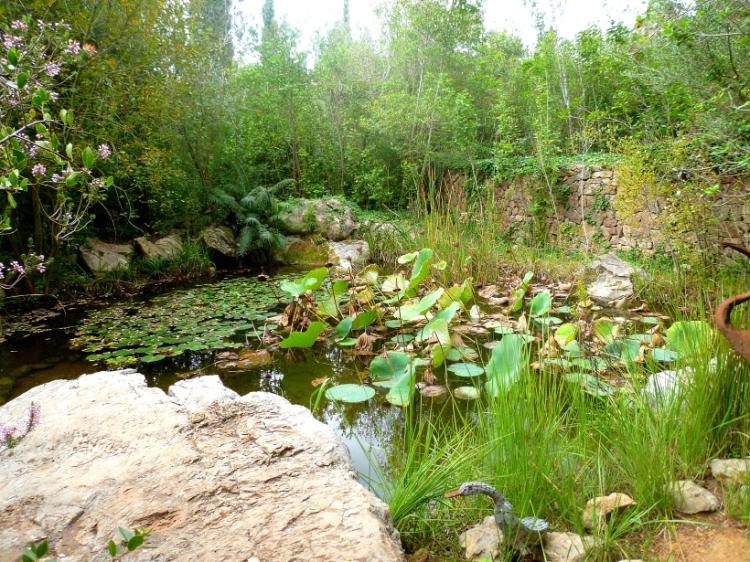 Alicante Albarda heron pond 1017