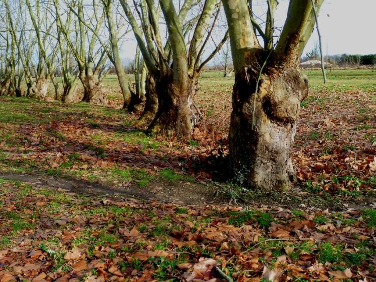 Jan 18 trees
