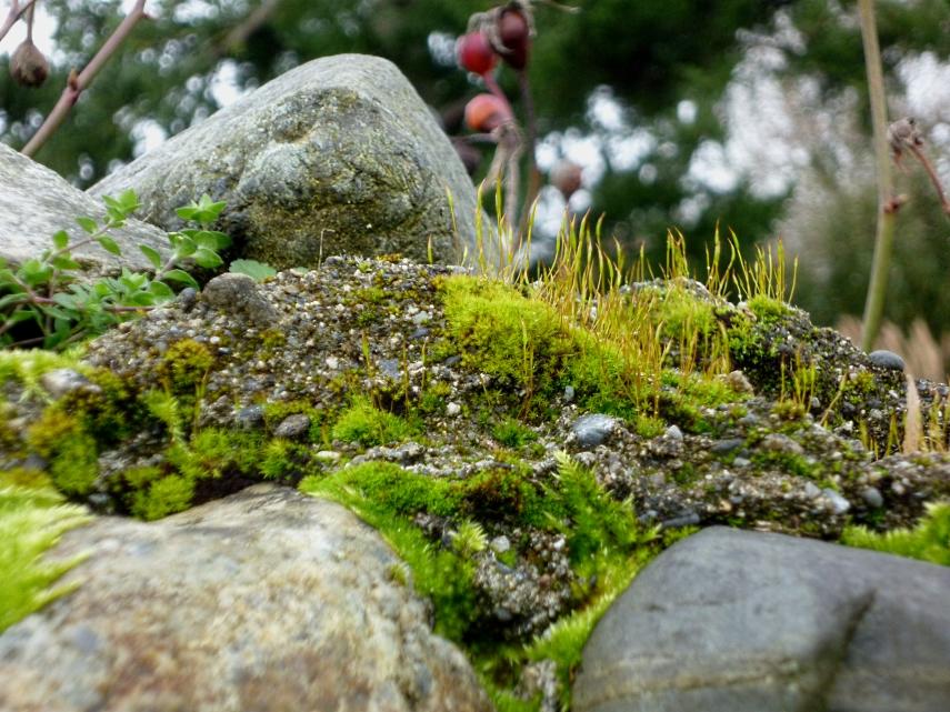 Moss 1 0218