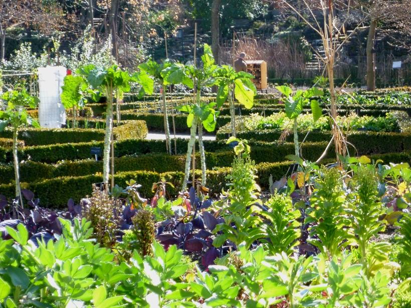 Edible garden madbot 0218