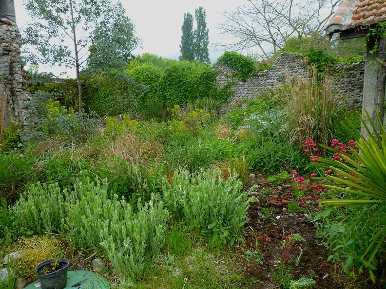 New Garden planting 518