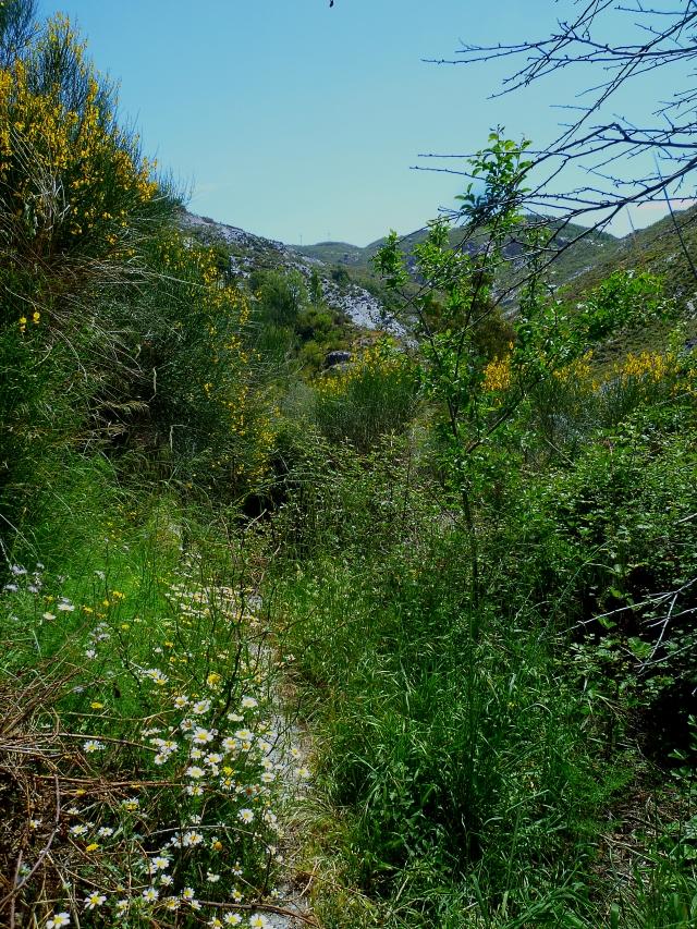 Spring landscape 518