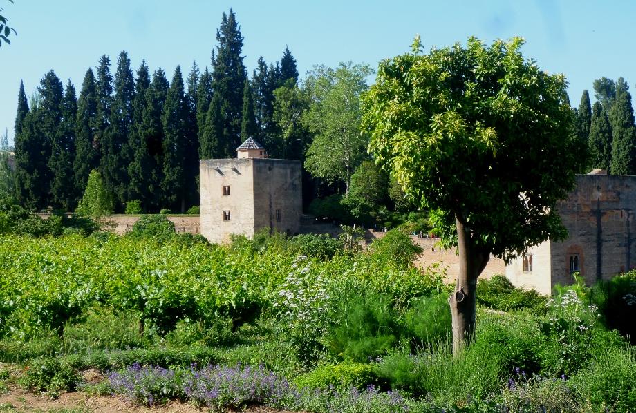 Granada Gen 17