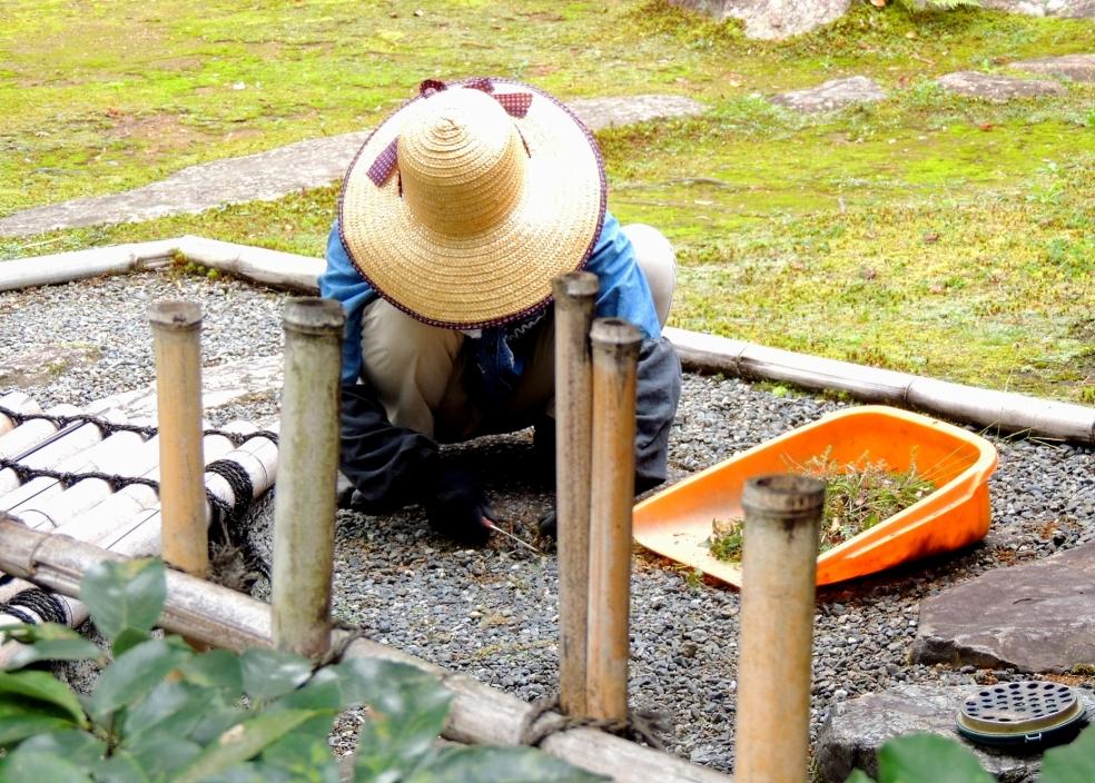 kodaiji gardener