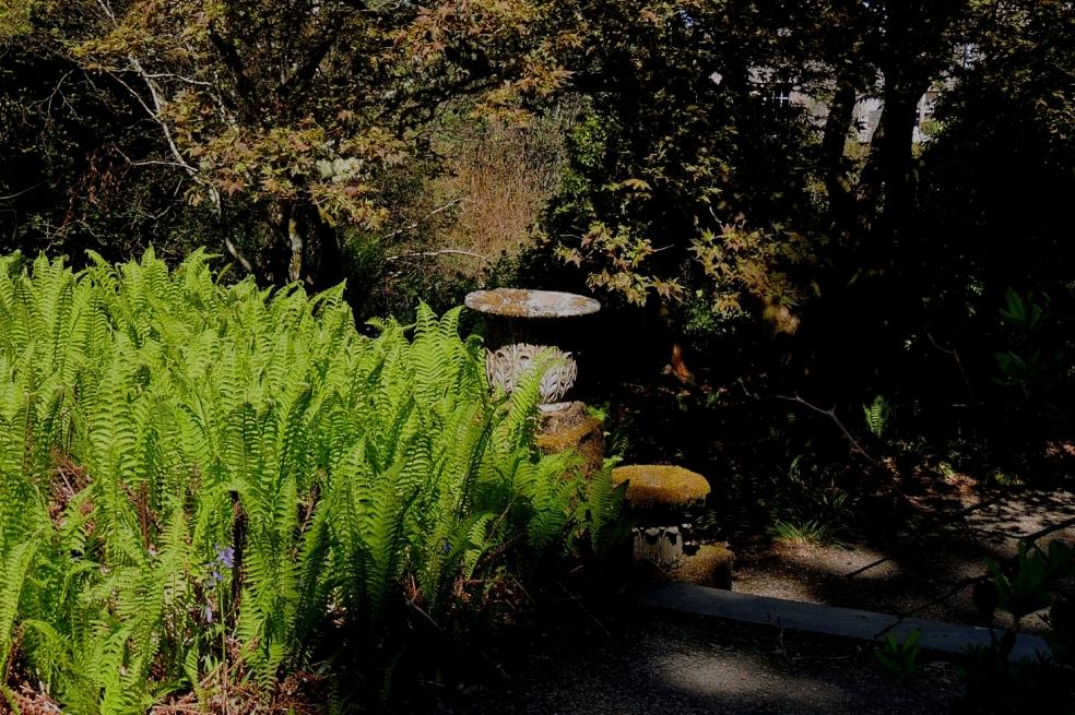 Dawyck ferns 0519